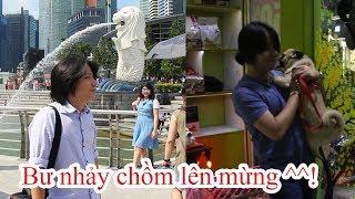 PUGK | Chủ đi Du lịch bụi Singapore 4 ngày - Pug Bư mừng muốn phát khóc khi gặp lại chủ