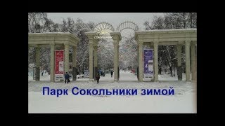 Парк Сокольники зимой Alexander Zakurdaev