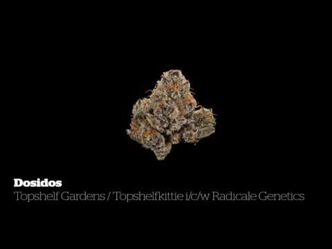 2016 Michigan Medical Cannabis Cup: Indica Flower Entries