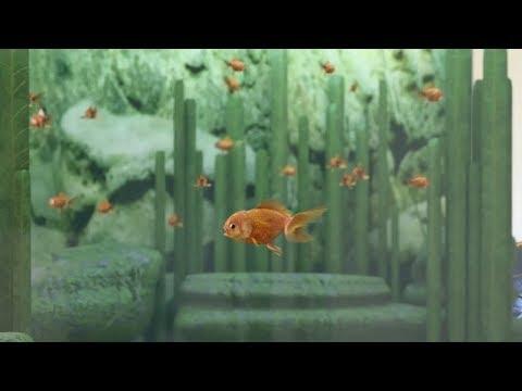 FishSim - GoldFish version update