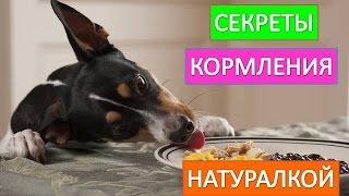 Кормление собаки. Как  правильно кормить собаку натуралкой.