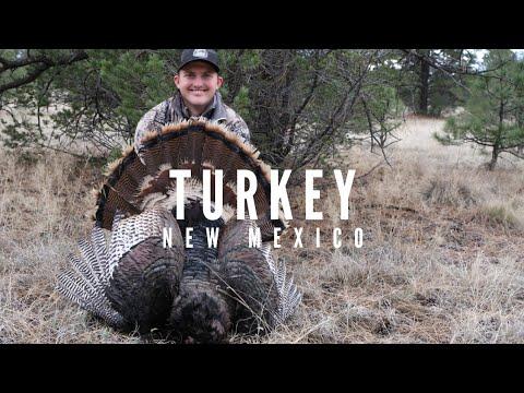 Turkey Hunt 2k19 - New Mexico