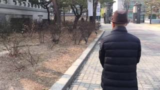 경복궁 청설모 (a red squirrel in Kyeongbokgung palace)