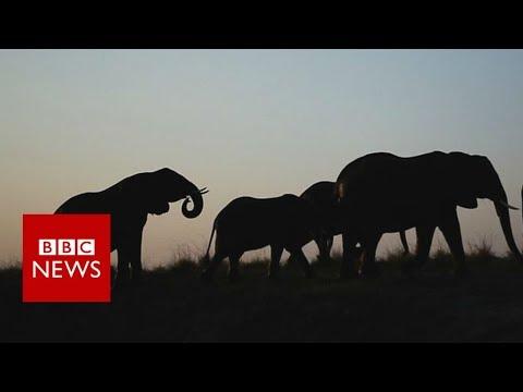 Can drones stop wildlife poachers? - BBC News