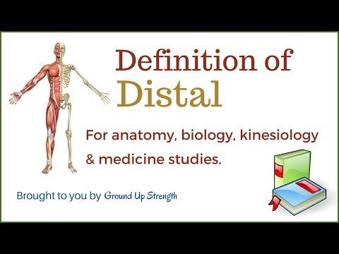 Distal Definition (Anatomy, Kinesiology, Medicine)