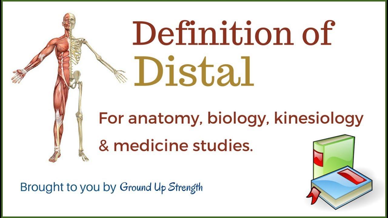 Distal Definition (Anatomy, Kinesiology, Medicine) - YouTube