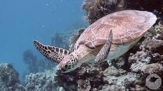 Best Diving in Egypt: Roots Red Sea : El Quseir