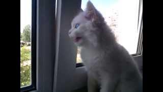 Говорящая кошка(, 2013-05-08T08:53:10.000Z)