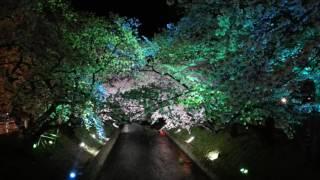 五条川の夜桜.