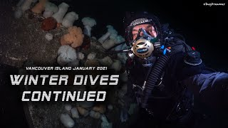 Winter Dives Continued (BC January 2021)