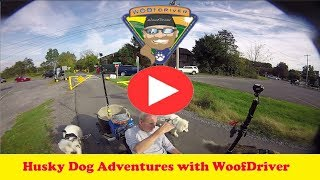 Dog Videos | WooFDriving The Buffalo Valley Rail Trail, PA  | Husky Dog Adventure