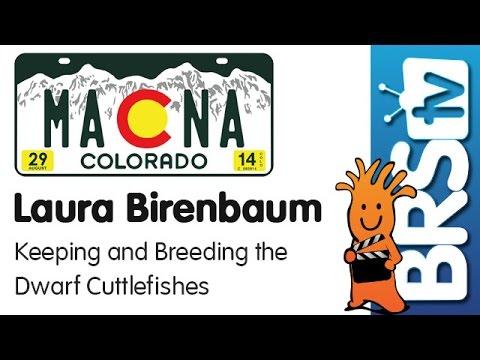 Keeping and breeding the dwarf cuttlefish by Laura Birenbaum | MACNA 2014