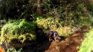 Video Diesel the Dog loves to Drink Clear Mountain Spring Water download MP3, 3GP, MP4, WEBM, AVI, FLV Oktober 2018