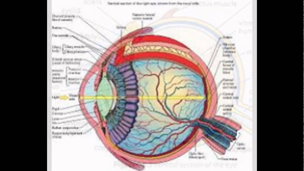 structure of human eye with diagram 12vdc 30 40a relay wiring images - youtube