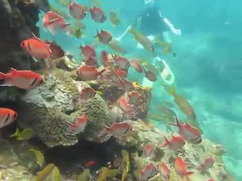 Scuba Diving in St. Lucia