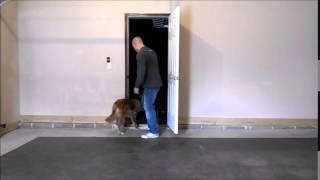 Off Leash K9 Training Cincinnati Dog Trainers- Golden Retriever Door Manners