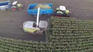 Old Manor Farm Maize Harvest 2014