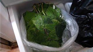 как заморозить листья для палочников