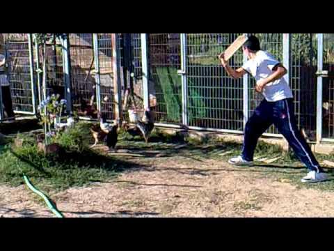 Niño correteando a gallo