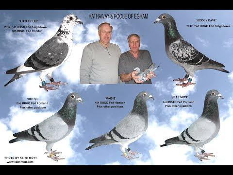 Video 357: Hathaway & Poole of Egham: Premier Pigeon Racers