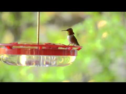 How Cool is That! - Hummingbirds