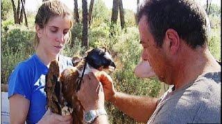 La conservación del Águila imperial en Andalucía