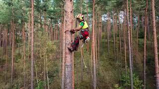 Steigeisen Baumklettern Ausr/üStung Klettern B/äume Artefakt Tree Climbing Spike Set und Baum Klettern Werkze Ausr/üstung Baumklettern Spikes und Klettern B/äume Artefakt,250Model