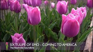 6 TULIPS OF EMO - 1ST COMING TO AMERICA