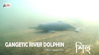 GANGETIC RIVER DOLPHIN. A Film By Champak Deka.