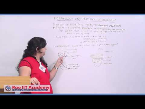 Morphology & Anatomy of Cockroach Part 1 - NEET AIPMT AIIMS Zoology Video Lecture