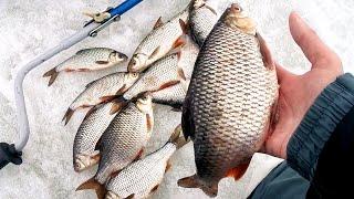 ДА ЗДЕСЬ ВСЕ КОРЯГИ ЗАБИТЫ РЫБОЙ! Рыбалка по последнему льду