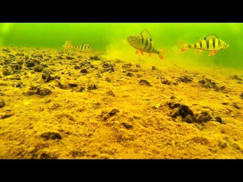 озеро черное щелковский район рыбалка