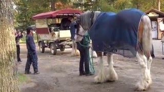 ノーザンホースパーク馬車のお馬さん交代☆Horse alternation of Horse-drawn carriage.