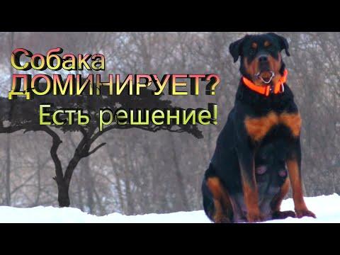 5 Пунктов Воспитания собаки. Собака Вас не слушается? Убираем гиперактивность и возбудимость.