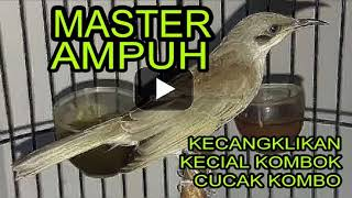 Download lagu Master Ampuh Kecangklikan Kecial Kombo Cucak Kombo MP3