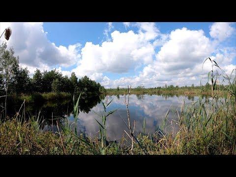 Мещёра: 7 дней на болотах, рыбалка, уха, грибы, ягоды, язь на спиннинг!