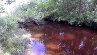 Река, которой нет на карте. Форель, Малина, Ирга, Белый гриб / brown trout fishing(, 2015-08-05T10:00:21.000Z)
