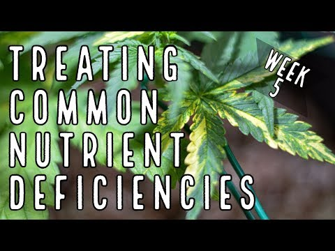 Common Deficiencies And The Way To Prevent Them