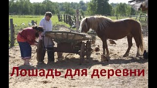 Лошадь для деревни.
