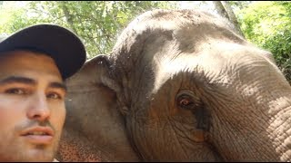 HANGING OUT WITH ELEPHANTS IN THAILAND w/ TFIL (bad thumbnail) Video