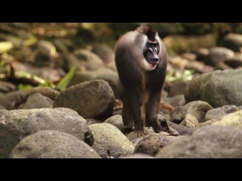 Protecting Biodiversity on Bioko Island