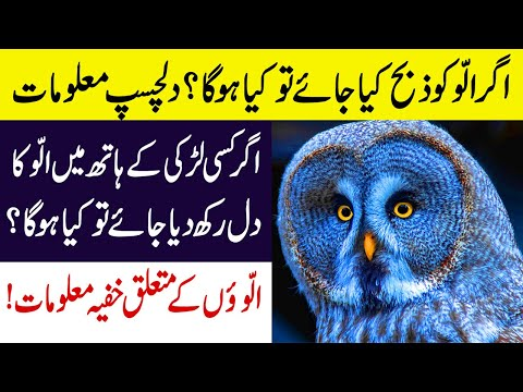 Mysterious Information About Owls in Urdu/Hindi || Most Beautiful Owls On Planet Earth Documentary!