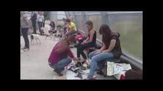Выставка бездомных кошек и собак проходит в Вологде