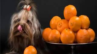 видео Витамины Полидекс для собак