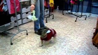 Вязаная одежда для собаки -работа ЗООателье НЮАНС