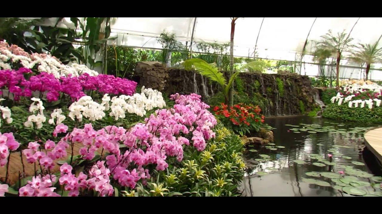 Jardines de mexico mi experiencia youtube for Losas de hormigon para jardines