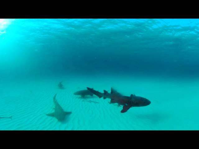 Discovery《週六鯊魚夜》VR 360度環景影片- 雙髻鯊環繞