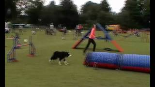 Dish - Tunnel Accident - Rugby Dog Agility Show 2011 - Running Contacts
