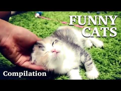 The best of videos funny cats compilations 2017 #2