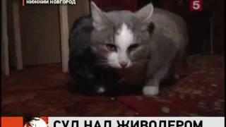 Обвинение в покушении на убийство котенка.